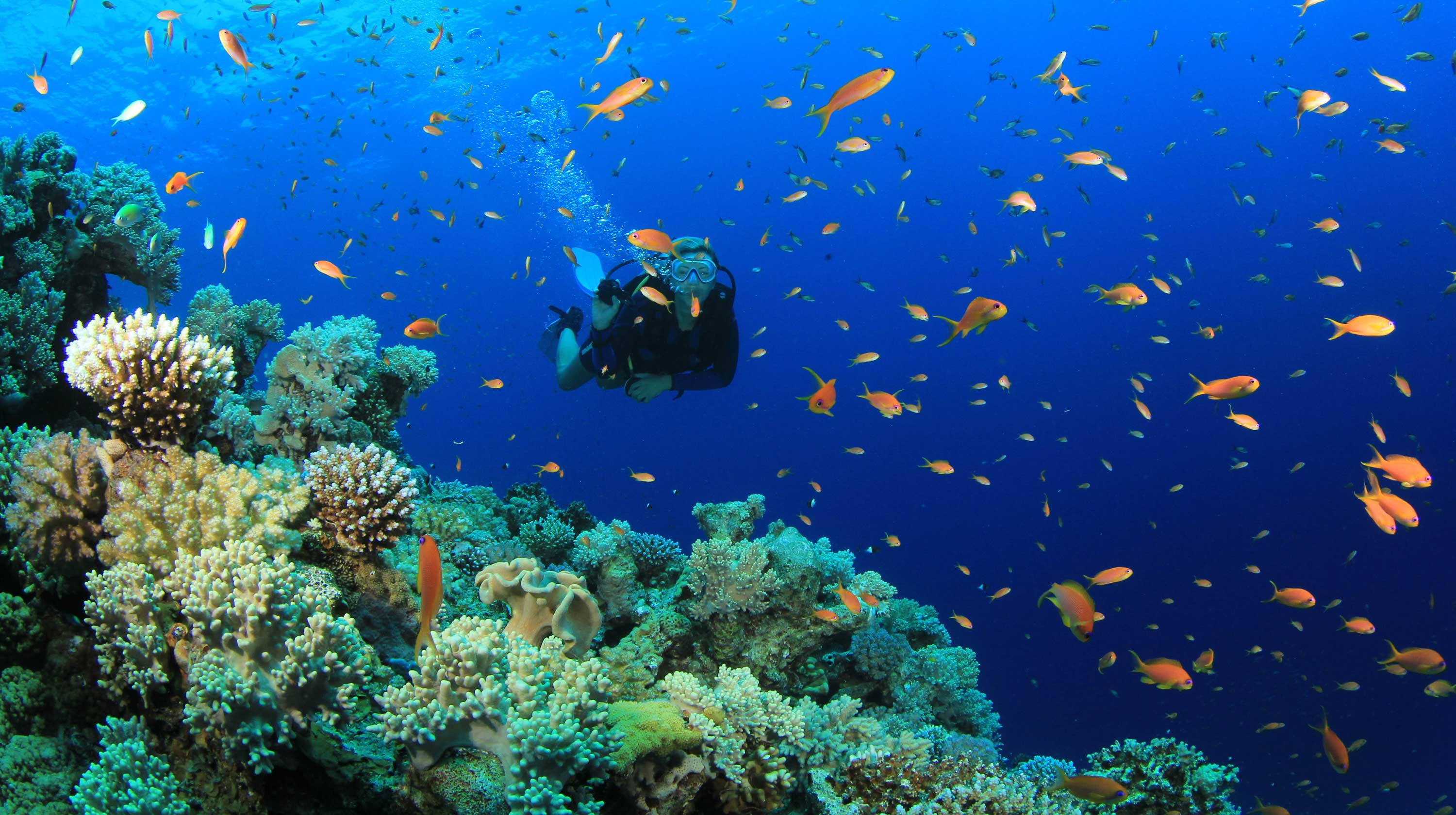 The Future of Coral – Climate Change and Coral Reefs in the U.S. and Japan
