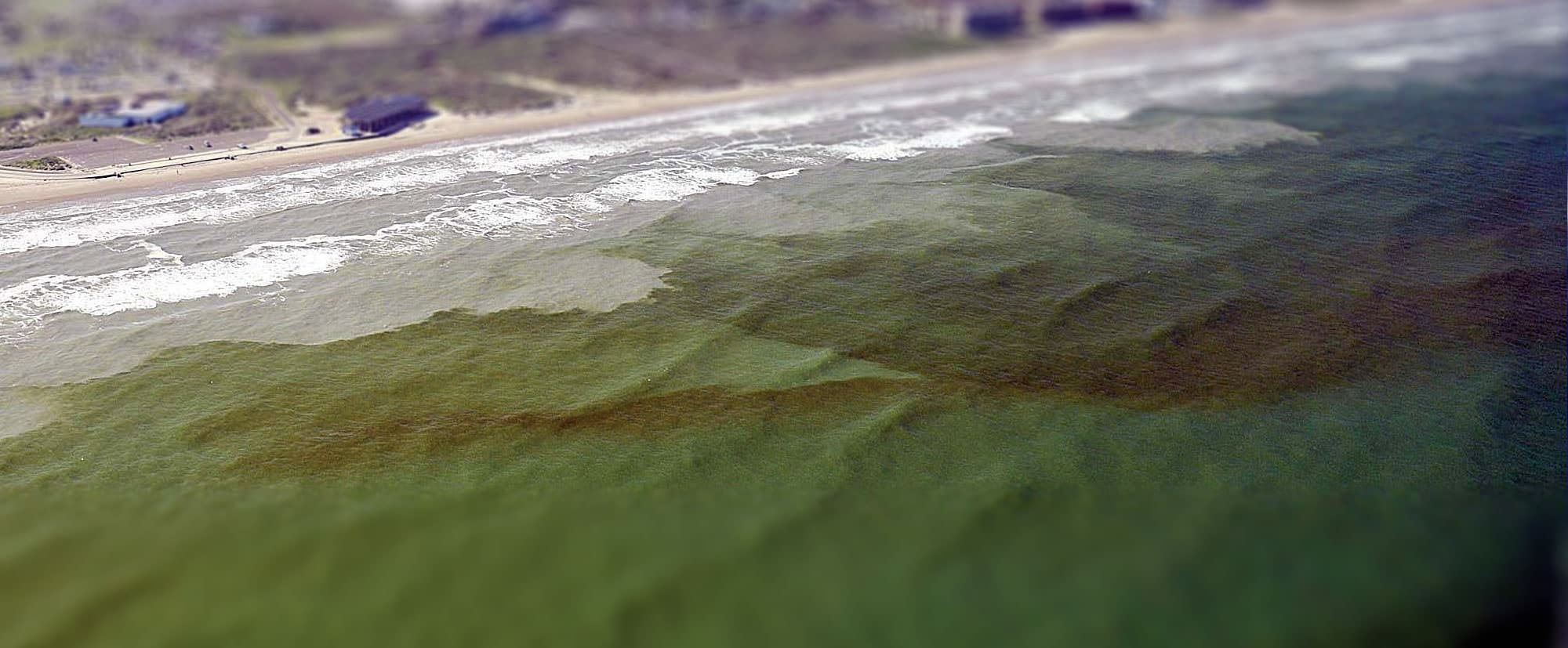FIU Expert Panel to Discuss Florida Red Tide