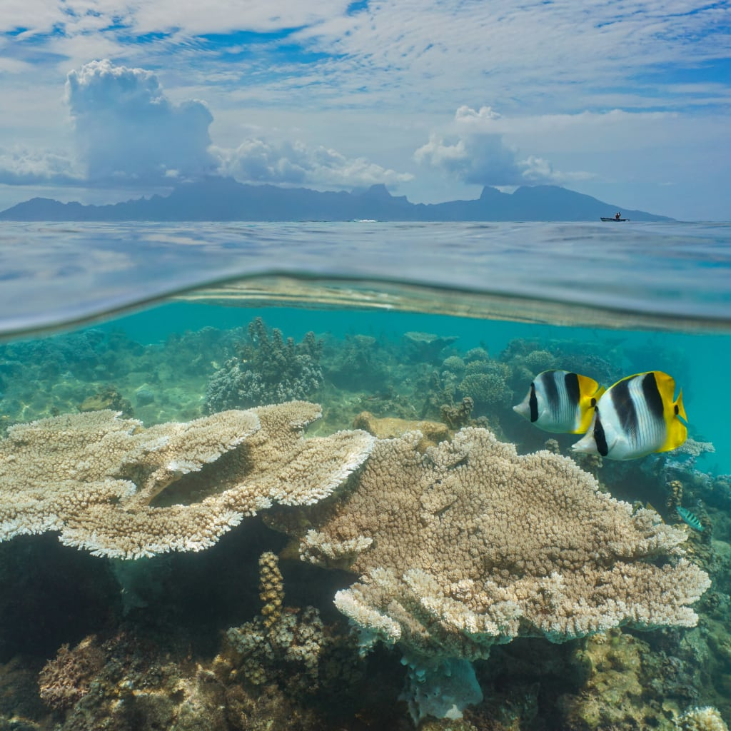 Studying how corals fight climate change at the molecular level